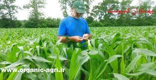 Photo of معایب کودهای شیمیایی در کشاورزی